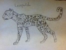 Leopard by AnamayCat