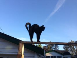 Peppermeow On the Fence by Rosepupp