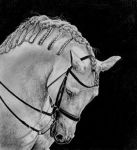 Andalucian horse by Anneliini