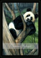 Panda Delight by Tammara