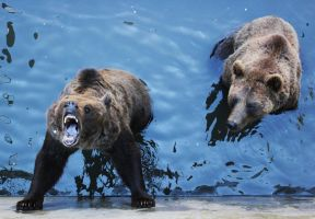 Bears Eating Popcorn - Stock by borda