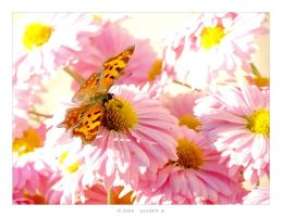 Butterfly II by 5uRt