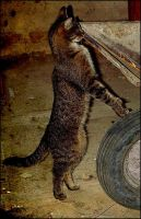 cat the builder by mefista