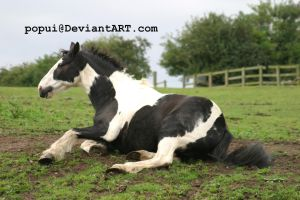Piebald horse rolling_stock by popui