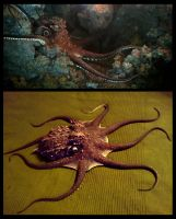Silicone octopus animatronic by earfox