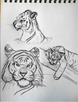 Tiger sketches 2 by Saborcat