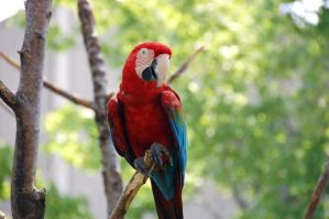Happy Macaw by littlerobin87