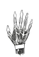 zentangled hand anatomy - outlines by mel-an-choly