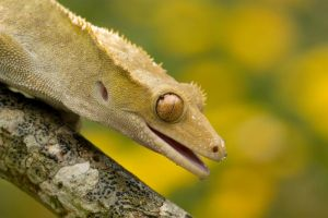 Summer gecko by AngiWallace