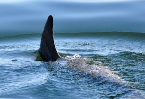 Jaws? by NB-Photo