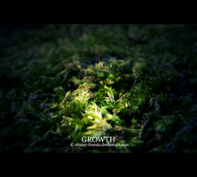 Growth by Winter-Freesia