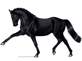 Black Horse by wideturn