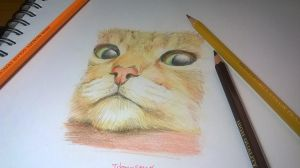 This is a cat! by dongseng23