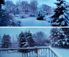 Snow 2-25-12 by BillReinhold