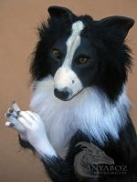 Border Collie Room Guardian by AnyaBoz