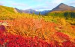 Alaskan Valley, Denali by iamintheprocess