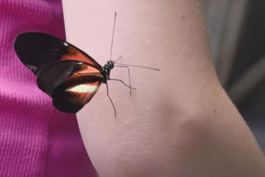 Welcome Friend, Butterfly On the Arm 2 by Miss-Tbones