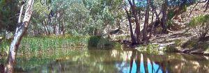 Just another Aussie pond by NicoleHarman
