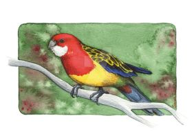 Eastern Rosella by saraquarelle