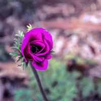 For Lois by ShlomitMessica