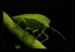 Bug 3 by Insect-Lovers-Club