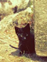 Little black cat by Daisydog8