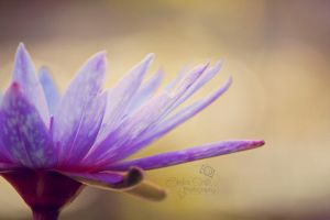 Lily II by CandiceSmithPhoto