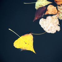 Leaf on water by CarlosBecerra