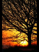 Tree at Sunset by GMCPhotographics