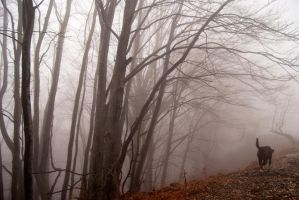 A walk in the fog by valentina----v