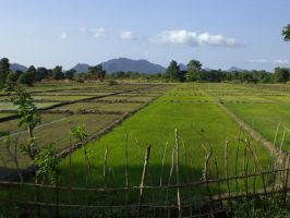 Rice Fields by JWBeyond