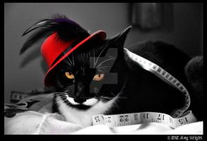 The Cat Hatter by Red-Wallflower