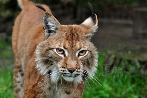 Lovely Lya by Tienna