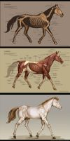 Horse anatomy by IC-ICO