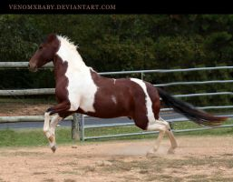 bay tobiano paint 3 by venomxbaby