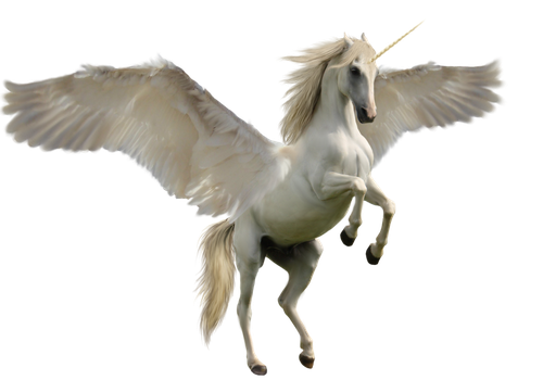 Winged Unicorn by Discoverie
