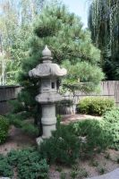 Denver Botanical 12 by Falln-Stock