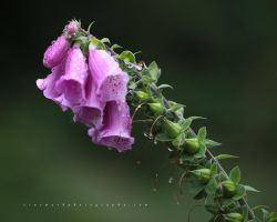 A Bell-like Tone by andras120
