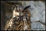 Bubo bubo by JWKS-photomancy