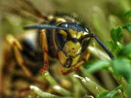 Wasp #3 by emalfni