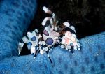 Living on a star by LazyDugong