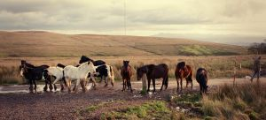 Divis Horses by Gerard1972