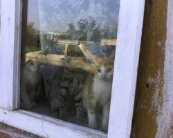 Kittens in the window by Dhacxaahsvost