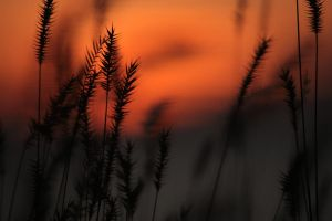 Grasses in the Flames 3 by UnderTheWildMoon