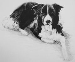 Collie by InjectVibrancy