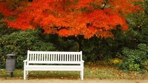 Bench I by HerrJanZ