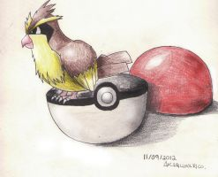 Pidgey  i choose you by AkariLunaRico