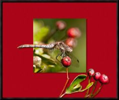 Dragon fly on Berries by pixellence2