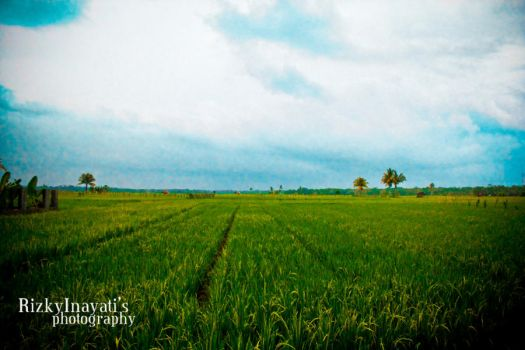 Sawah Hijau by hereismy