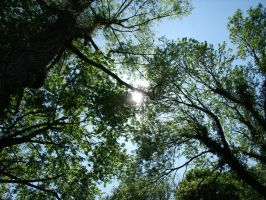 Trees and sun 11 by BMFMhero1991